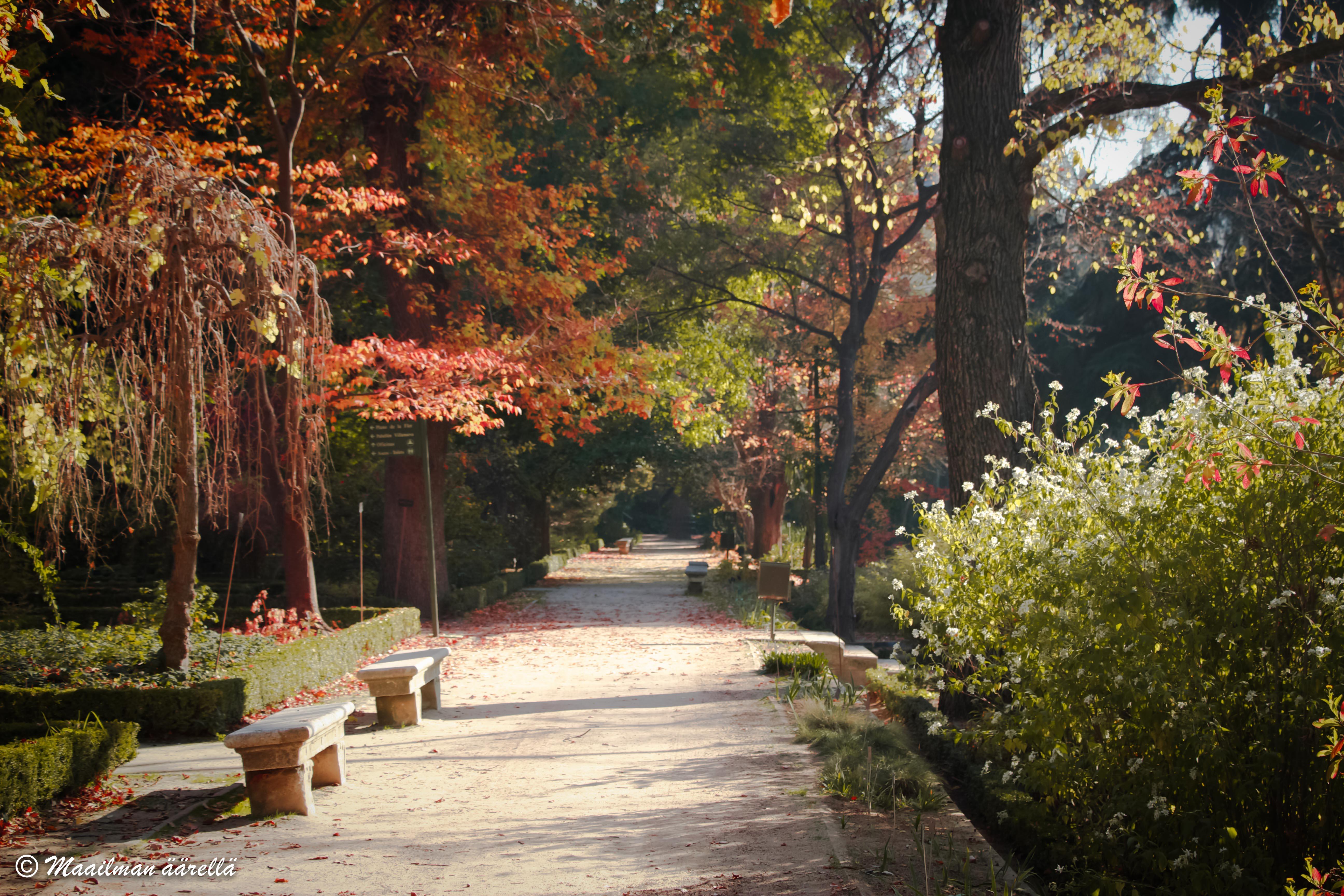 Real_Jardin_Botanico-1-4