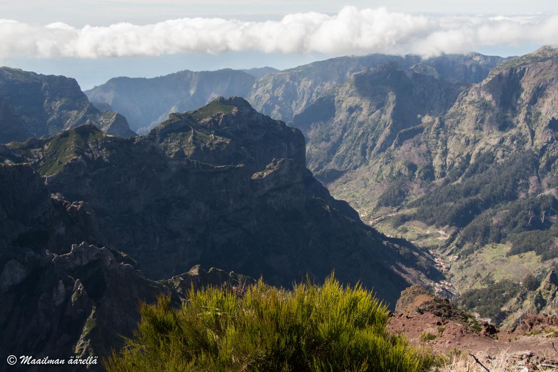 Madeira_Ruivo