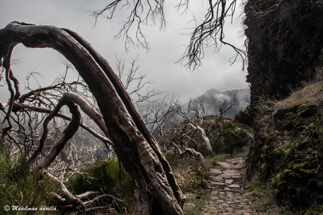 Madeira_patikointi