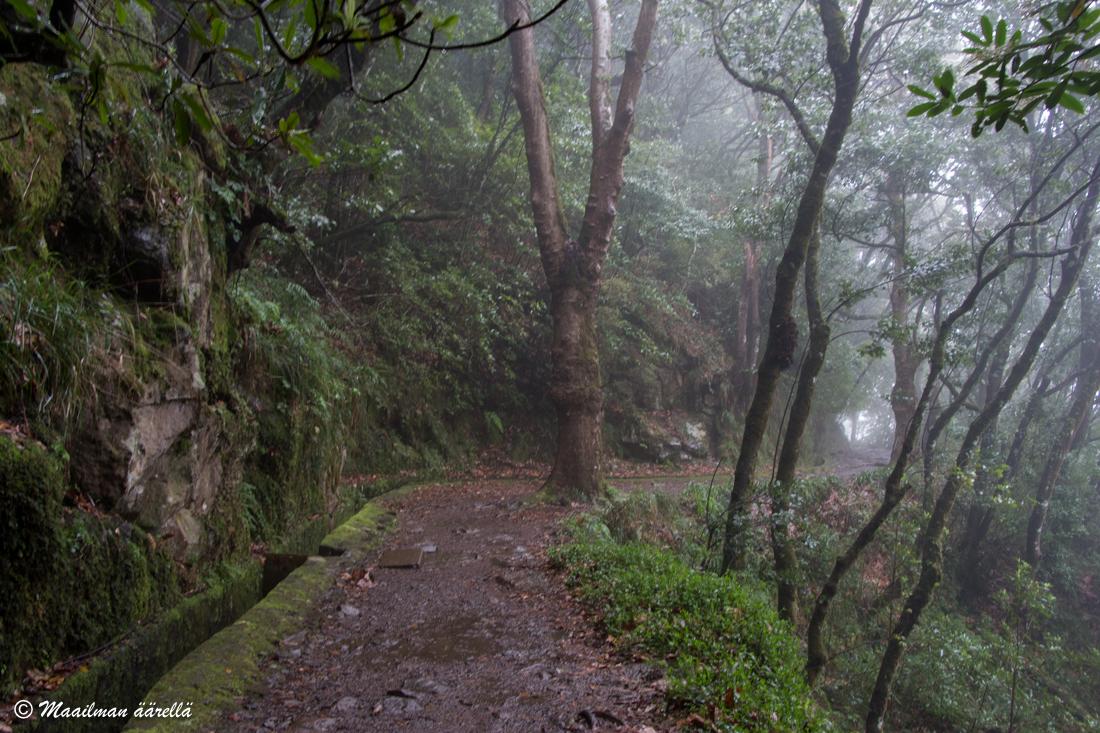 Madeira metsä