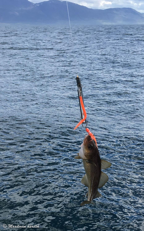 islanti kalastus