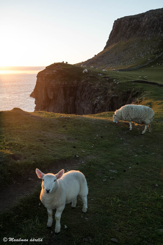 Skotlanti Neist Point