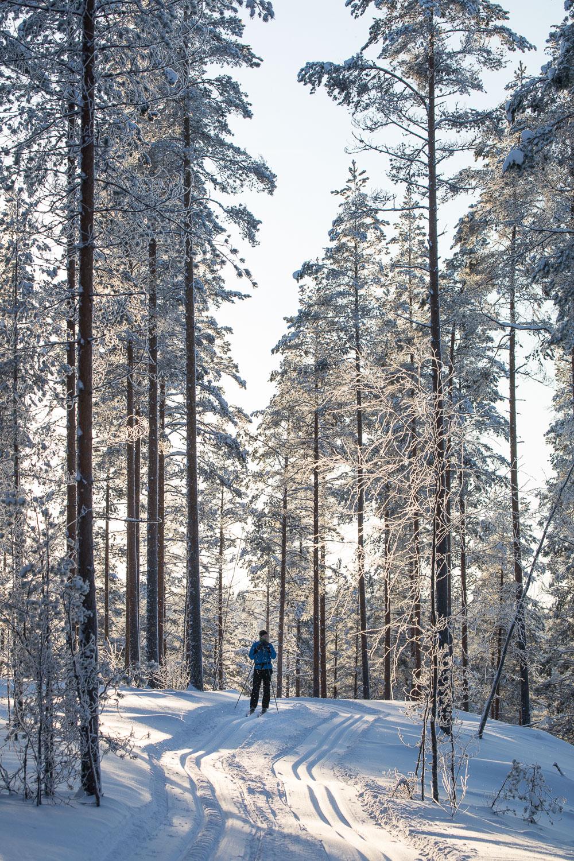hiihto Norppa-Majat