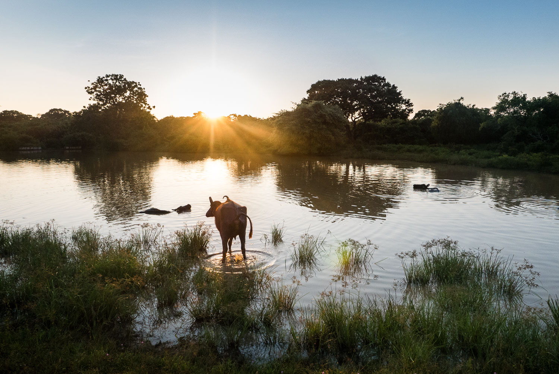 Sri lanka safari