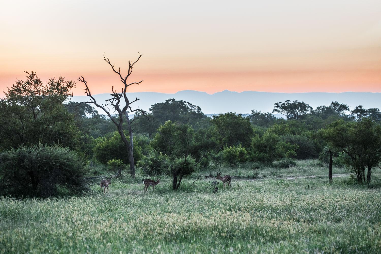 auringonlasku_impala_afrikka