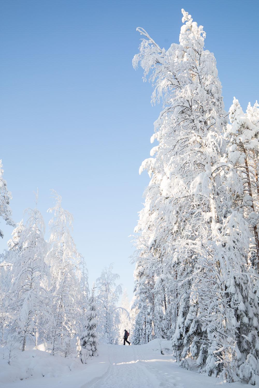 lumikenkäily Järvisydän