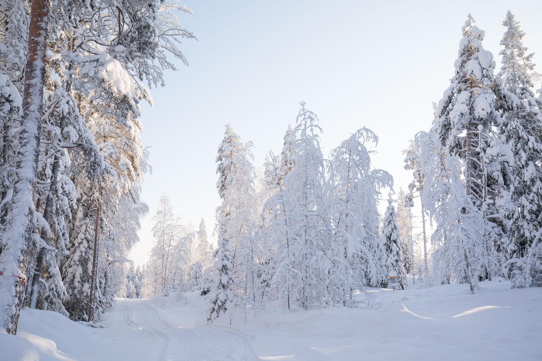 lumikenkäily