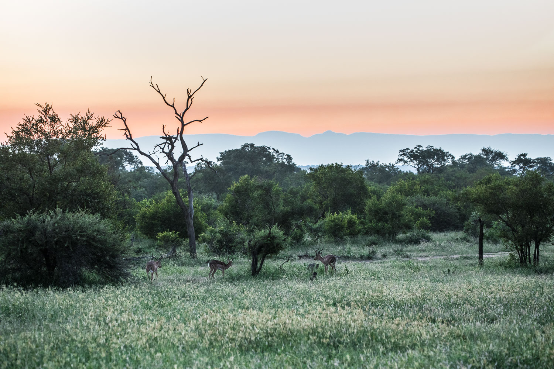 auringonlasku safari