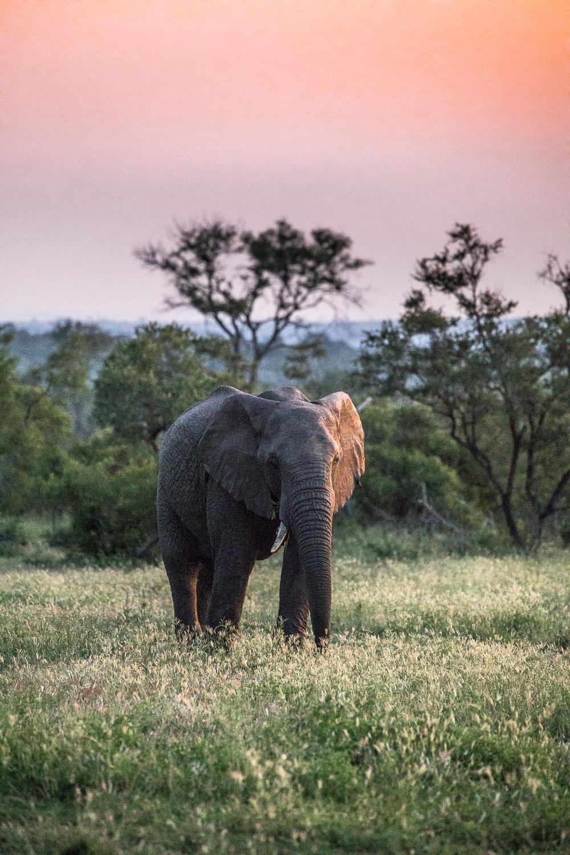 safari_norsu