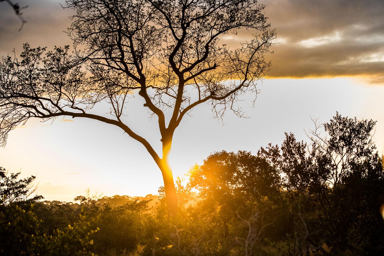 auringonlasku_safari
