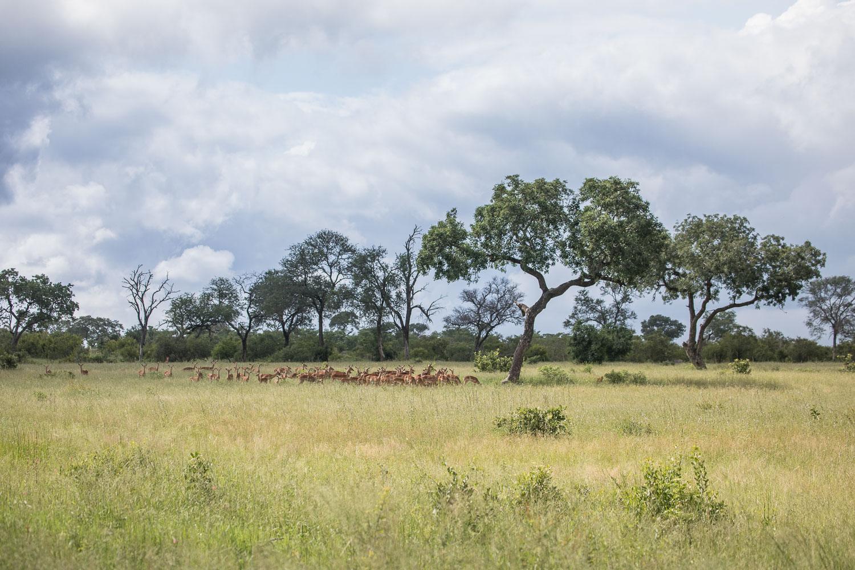 imalala_safari