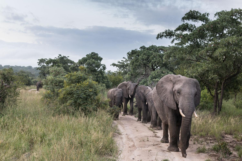 safari_eteläafrikka