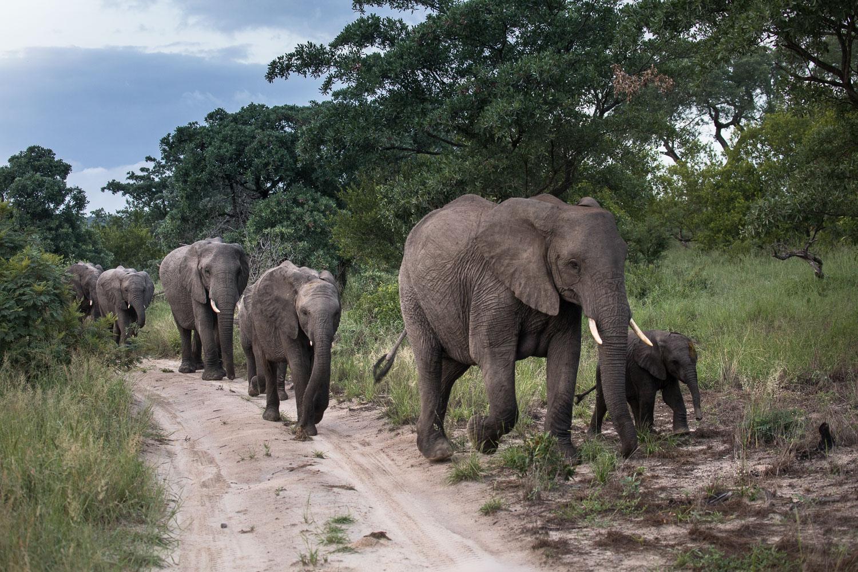 safari_norsut
