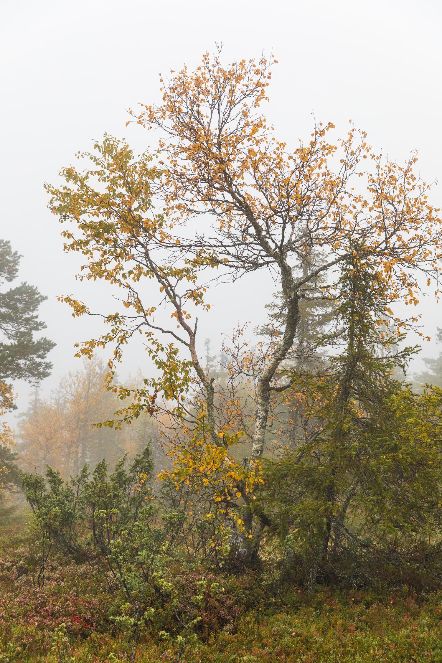Valtavaara_Kuusamo