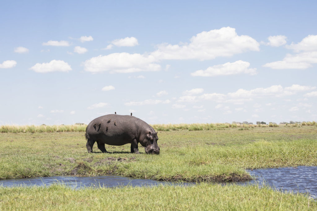 Safari Botswanassa