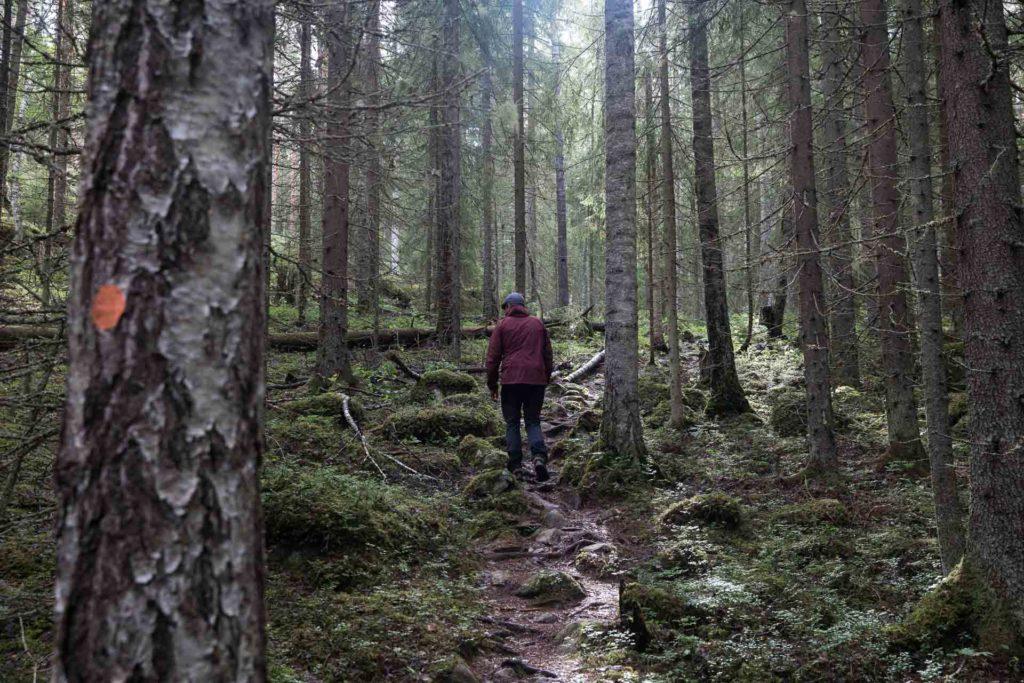 Koloveden Kansallispuisto patikointi