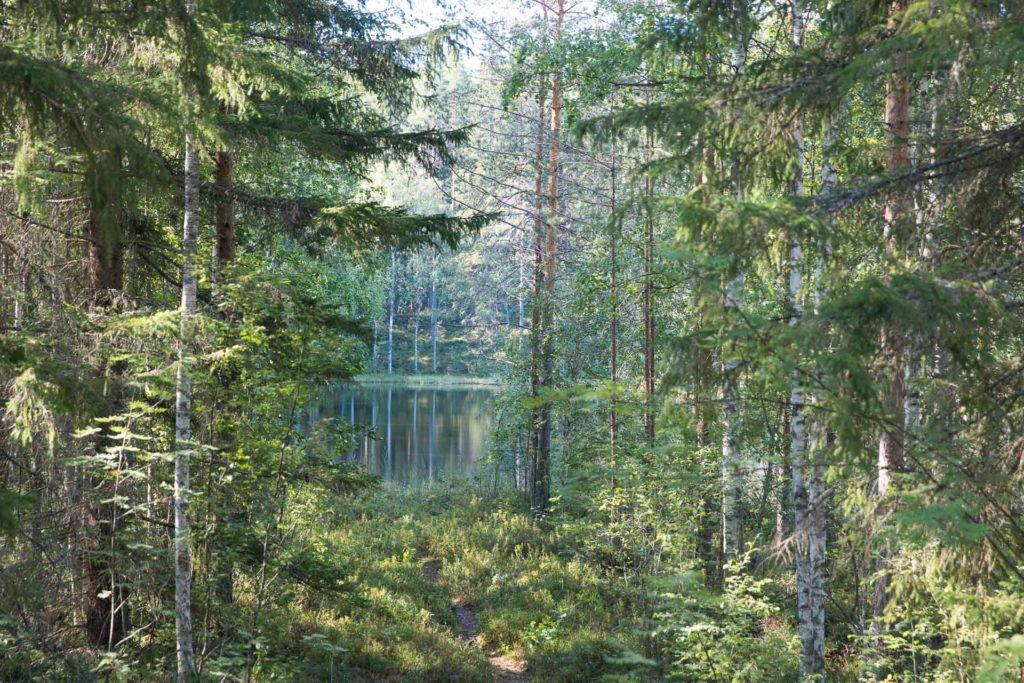 Patikointi Savonlinna
