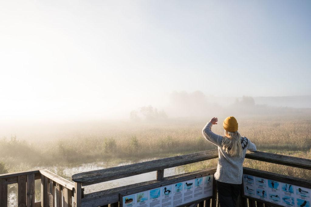 Siikalahden lintujärvi