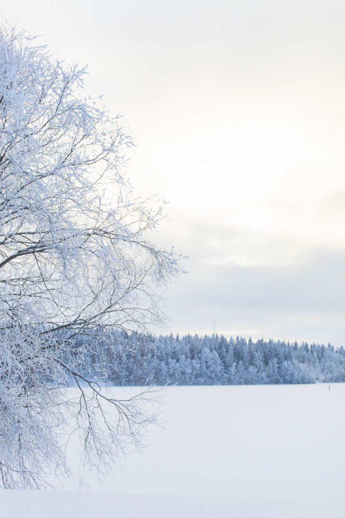Riihisaari Savonlinna